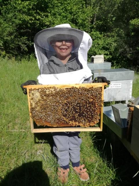 Atelier découverte de l'abeille