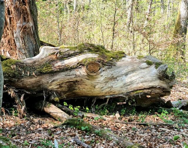 Randonnée accompagnée : la forêt magique du Mont Mussy